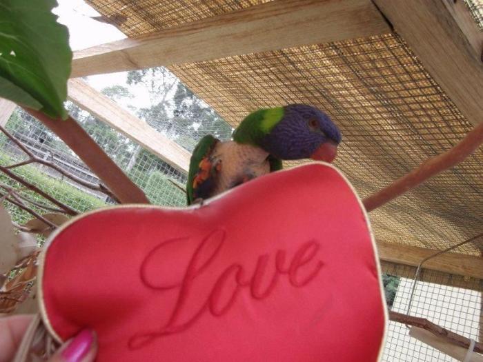agapi love 2